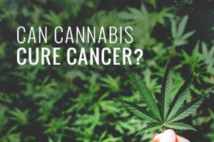 1 1 300x200 - The Science Behind How Medical Marijuana Can Help Cancer Patients